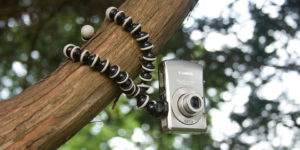 Gorillapod on tree